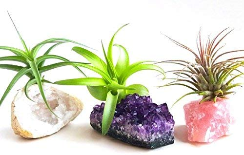 diy mini zen garden air plants crystals