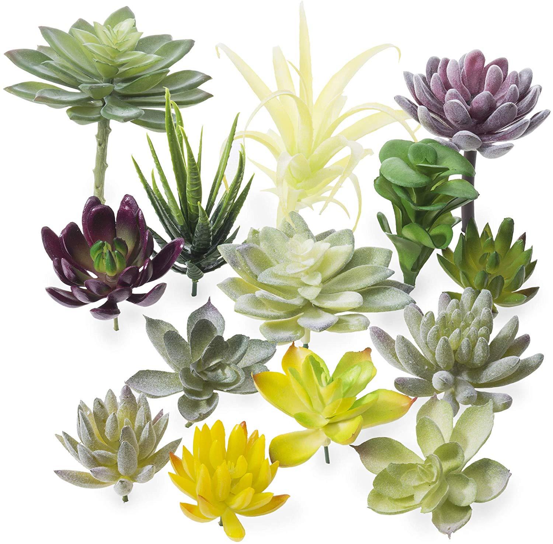 diy mini zen garden plant