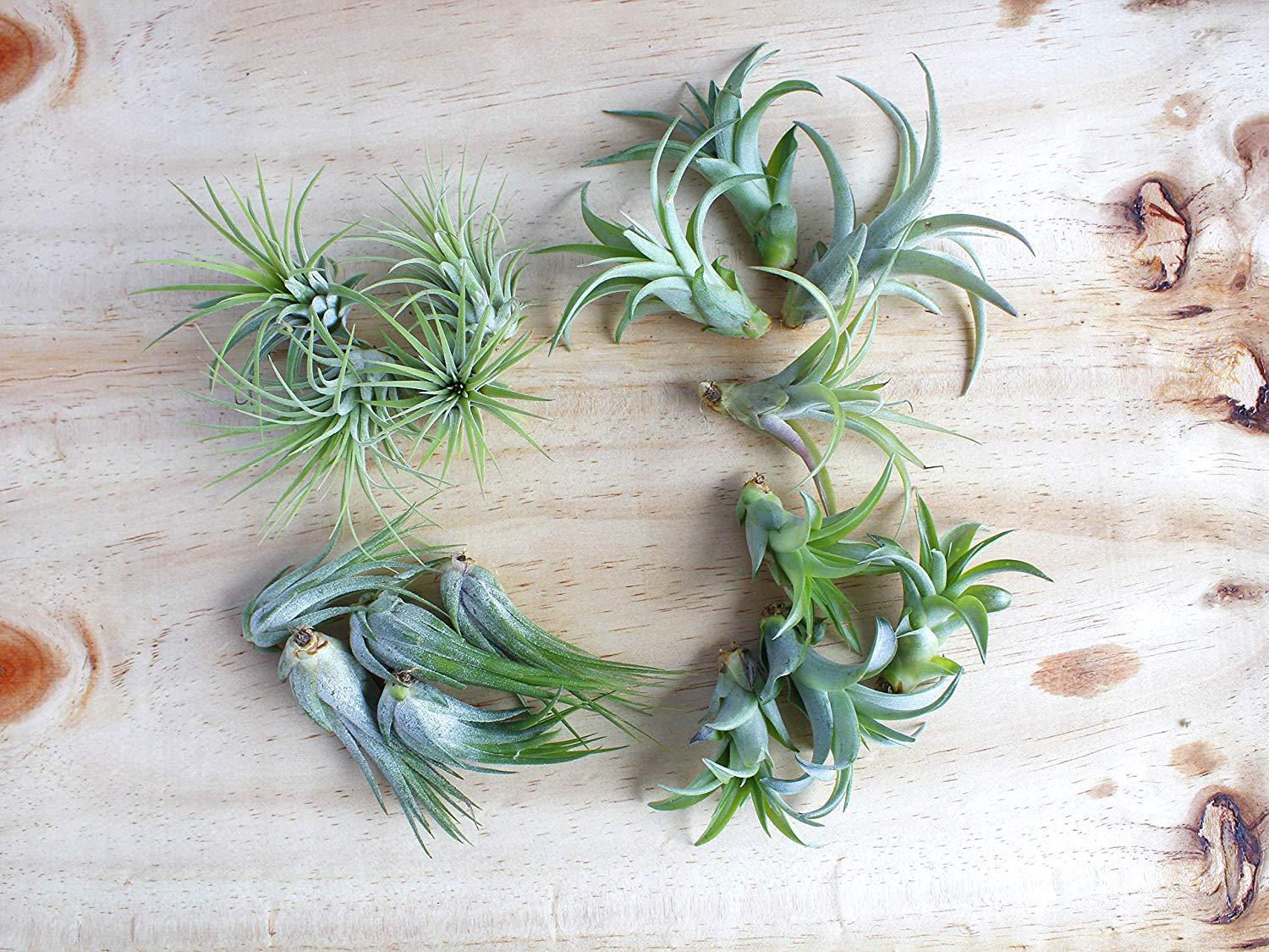 mini zen garden air plants