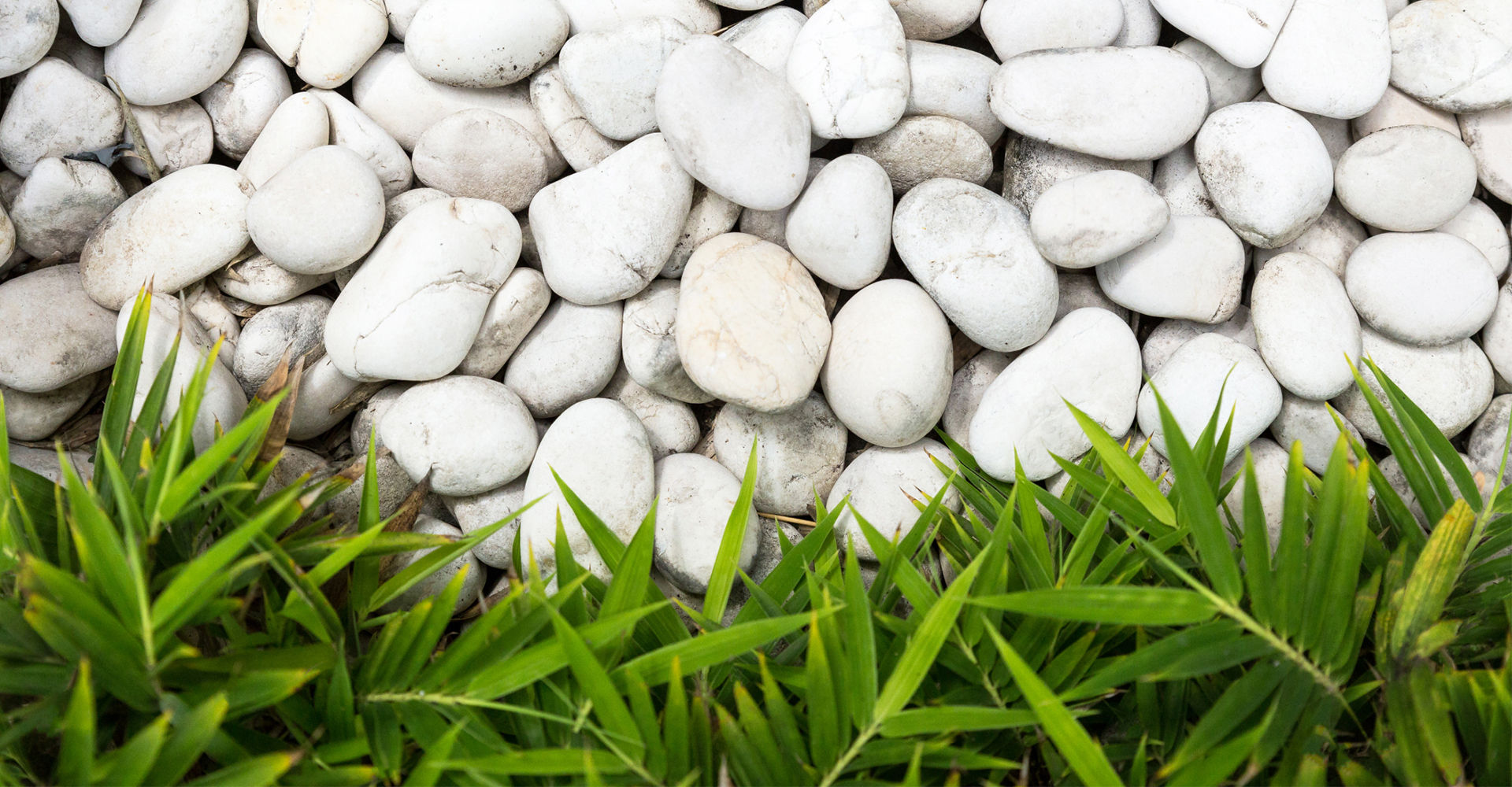 All you need to know about Mini Zen Garden: Top 5 Benefits